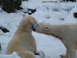 Photo: Und weil die Gianna dem Knut so gefaellt, bekommt sie ein Bussi :-)