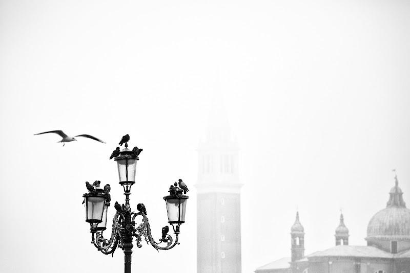 Semplicemente Venezia di Marcello Zavalloni