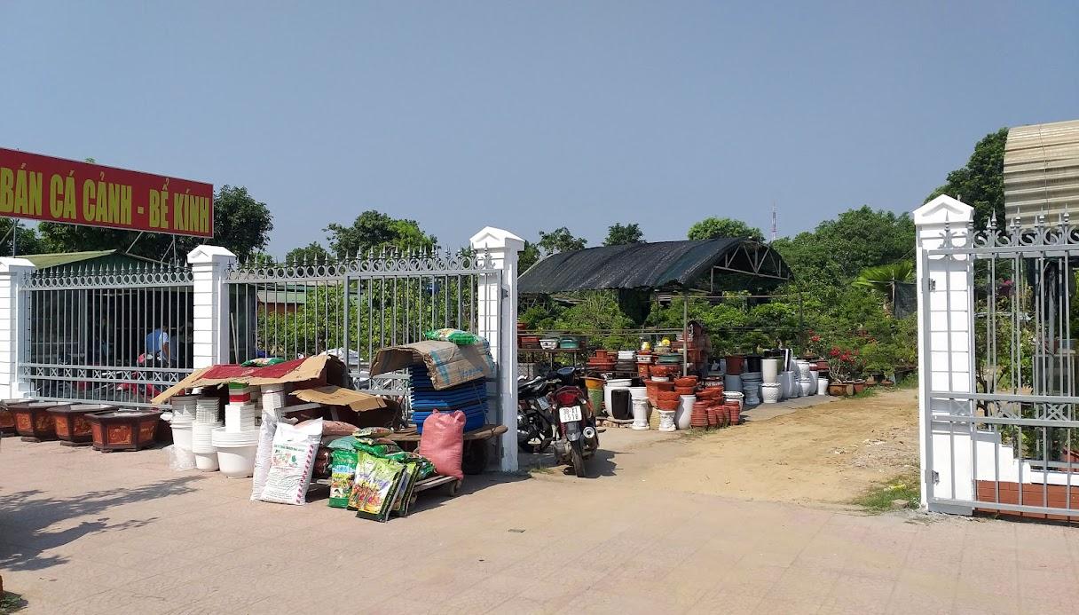 Cho đến nay, khu đất kinh doanh cây cảnh, cá cảnh tại phía Nam quảng trường Hồ Chí Minh, giáp đường Trường Thi (TP Vinh) vẫn chưa di chuyển