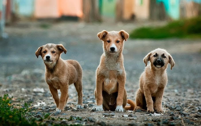 Worrying number of pets abandoned locally