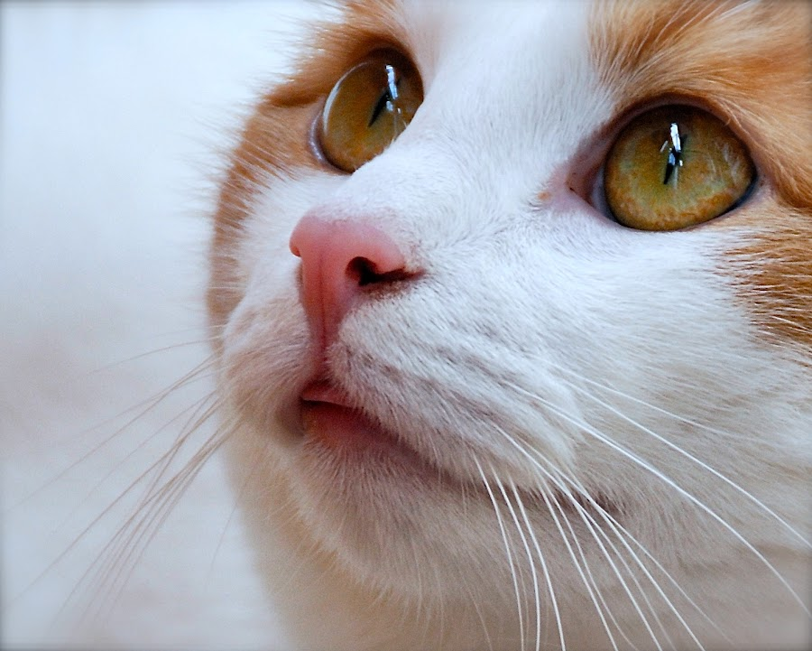 kiki by Almasa Dalan - Animals - Cats Portraits
