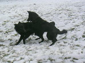 Photo: Met Balou in de sneeuw