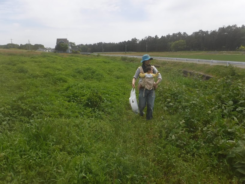 こんなに野草がいっぱい