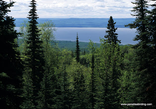 Photo: Boreal forest above Lesser Slave lake, northern Alberta
