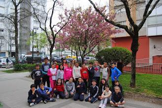 Photo: Cerdeira xaponesa florida 5ºA Curso 2014-15 http://herbasdoghafos.blogspot.com.es/2015/04/cerdeira-xapones-florida.html