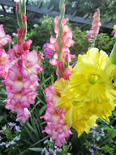 Photo: Yellow and pink and white flowers in the morning at Wegerzyn Gardens in Dayton, Ohio.