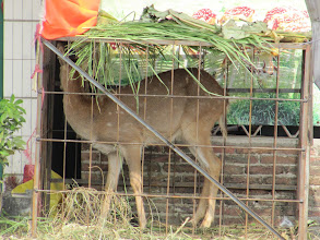 Photo: Day 205 - Poor Deer in Its Cage