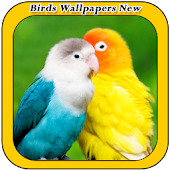 Birds Wallpapers New