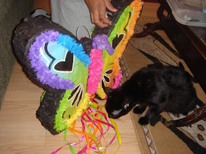 Photo: Osiris checks out the strings of the pinata.