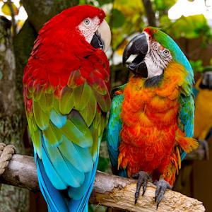 Macaw001.jpg