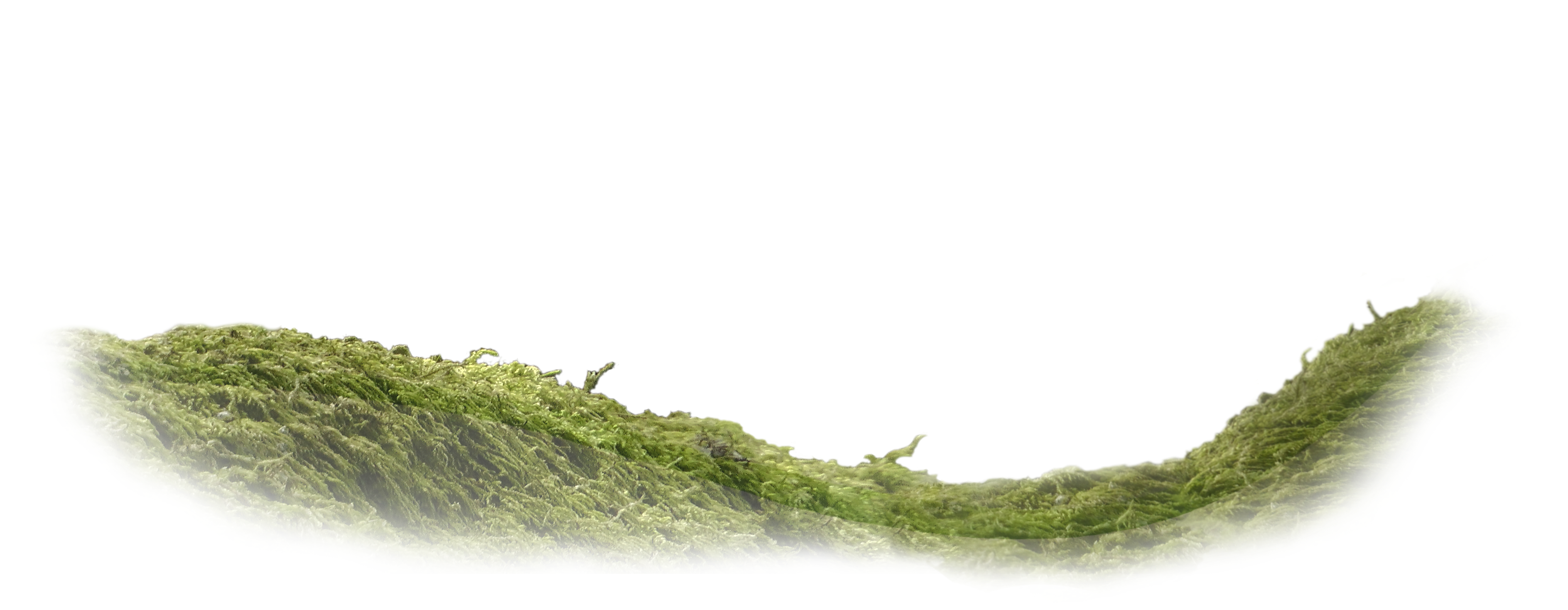 A film from The Top Of The Tree