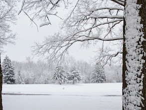 Photo: Beautiful snowy trees at Eastwood Park in Dayton, Ohio.