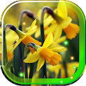 Narcissus Flowers icon