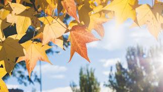 El otoño sorprende con temperaturas más propias del verano.