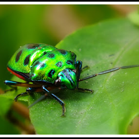 Bug by Debojyoti Chakraborty - Animals Insects & Spiders
