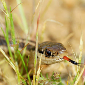 BOOO!!! by Steve Kane - Animals Reptiles