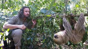 Brazilian Bigfoot thumbnail
