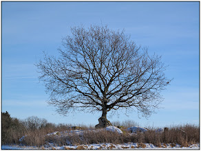 Photo: 30. januar 2011 - Månedens motiv