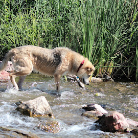 Eye on The Ball by Diane Garcia - Animals - Dogs Playing ( dogs, playing, water,  )