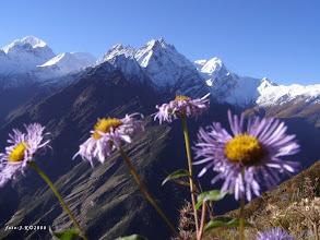 Photo: Astra alpinska? ...alebo zeby himalajska?:)