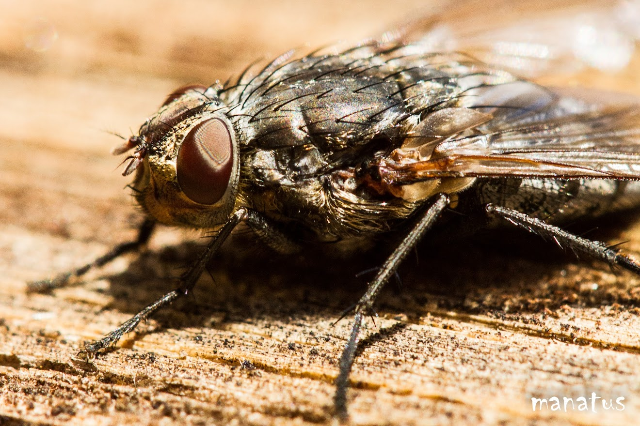primer plano de mosca