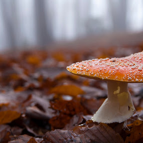 foggy by Blaž Ocvirk - Nature Up Close Mushrooms & Fungi