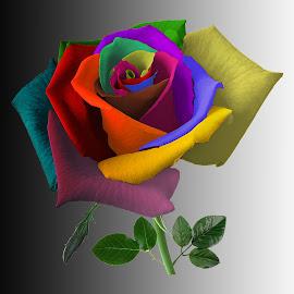 ROSE by Jaysinh Parmar - Digital Art Things