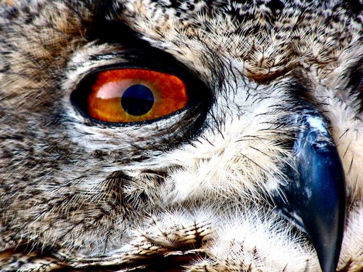 Owl's eye. di ksyma