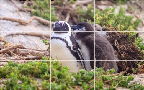 Puzzle – Bears and penguins 5