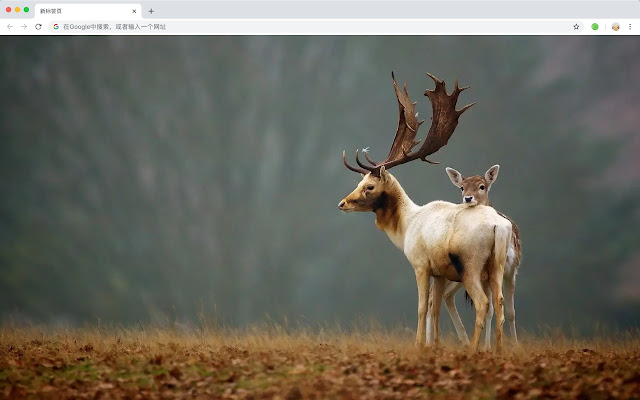 Elk New Tab Animals HD Wallpapers Themes