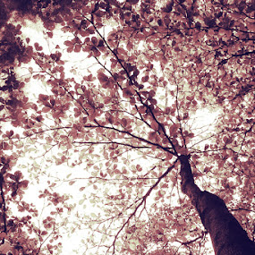sabuga by Pantouw David - Nature Up Close Trees & Bushes