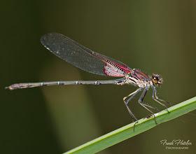 Photo: Photography by Frank Hatcher   /     http://www.frankhatcher.com