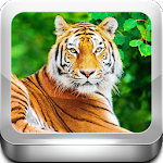 Escape Game-Tiger Zone Icon