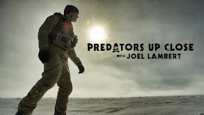 Predators Up Close With Joel Lambert thumbnail
