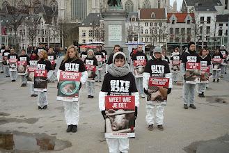 """Photo: L'association flamande Bite Back révèle une enquête filmée dans 9 élevages belges de cochons, dont certains appartiennent à des porte-parole des agriculteurs, vainqueurs du """"Golden Pig Award""""... Elle est là, la réalité des animaux, pendant que les mensonges publicitaires défilent sur les écrans.  http://www.youtube.com/watch?v=dLAeV_t2H3w  http://www.youtube.com/watch?v=jxiLaUQPSrc"""