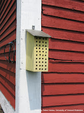 Photo: Solitary bee house.