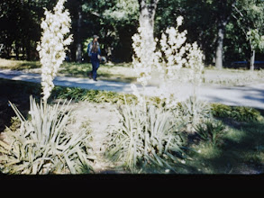 Photo: Park Gardens 1952