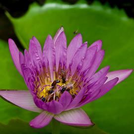 by Richard Idea - Flowers Flowers in the Wild