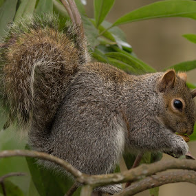 Squirrel eating by Doris B - Animals Other Mammals ( nature, grass, green, nuts, eating, hungry, squirrel )