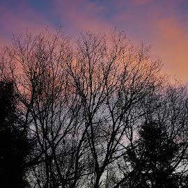 Dainelson Sunrise by Martin Stepalavich - Landscapes Sunsets & Sunrises