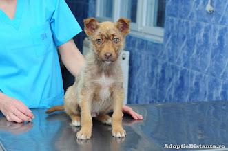 Photo: 29.03.2013: Dupa ce a fost returnat, Levis a ramas la cabinetul veterinar Happy Pet Clinic, Inca mai este putin racit, dar are mare nevoie de o casuta a lui si de un stapan potrivit pentru un catel mic si activ ca el. Contact: adoptiedistanta@yahoo.com