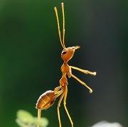 Примета муравьи в доме