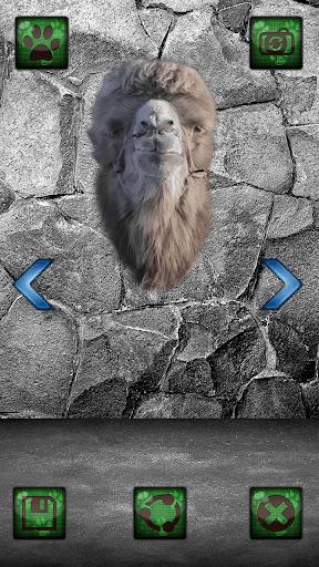 無料摄影Appの動物写真編集者|記事Game