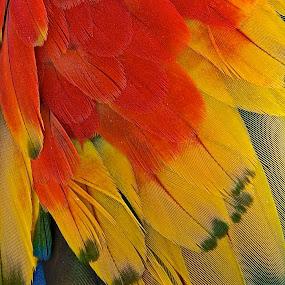 by Karl Cummings - Animals Birds