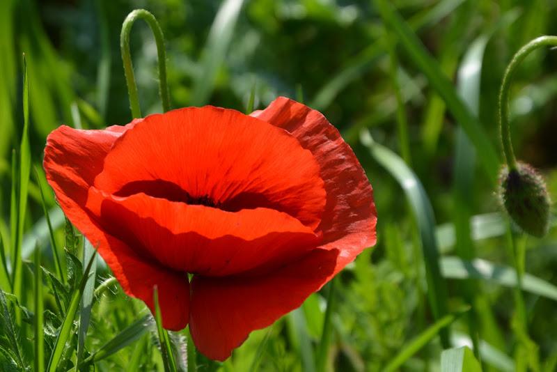 Corteggiamenti floreali... di AlessandraPaci