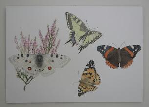 Photo: Perhosistaan kuuluisalla saaret perhoset tulevat sisällekin :-)