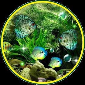 Аквариумные рыбы LWP