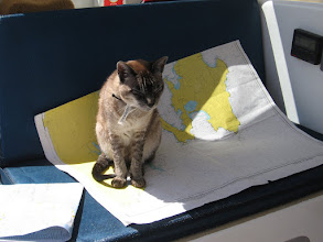 Photo: Cat assisting with navigation