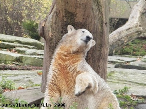 Photo: Suesser Knut-Blick :-)