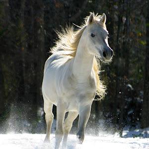 horses 009.jpg